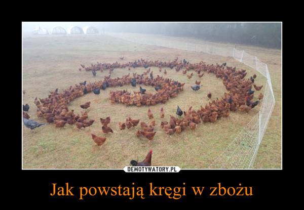 Jak powstają kręgi w zbożu –
