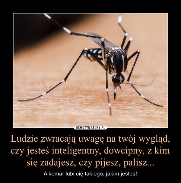 Ludzie zwracają uwagę na twój wygląd, czy jesteś inteligentny, dowcipny, z kim się zadajesz, czy pijesz, palisz... – A komar lubi cię takiego, jakim jesteś!