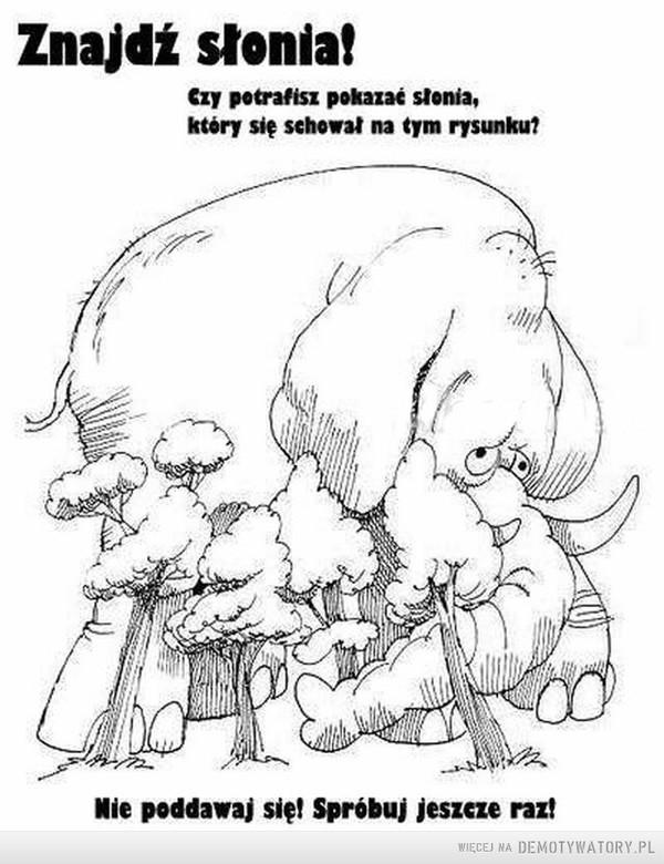Znajdź słonia –  Znajdź słonia! Czy potrafisz pokazać słonia, który się schował na tym rysunku?Nie poddawaj się! Spróbuj jeszcze raz!