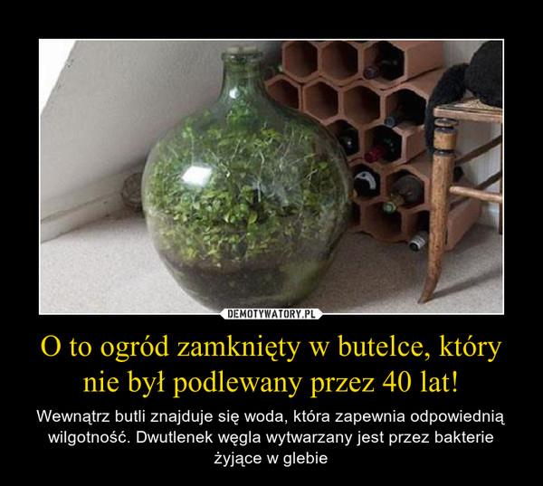 O to ogród zamknięty w butelce, który nie był podlewany przez 40 lat! – Wewnątrz butli znajduje się woda, która zapewnia odpowiednią wilgotność. Dwutlenek węgla wytwarzany jest przez bakterie żyjące w glebie