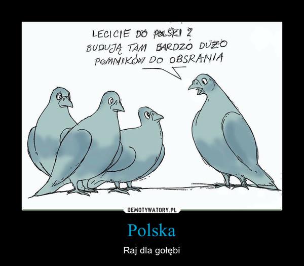 Polska – Raj dla gołębi