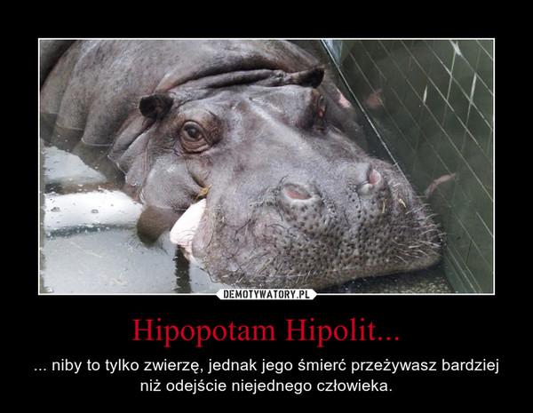 Hipopotam Hipolit... – ... niby to tylko zwierzę, jednak jego śmierć przeżywasz bardziej niż odejście niejednego człowieka.
