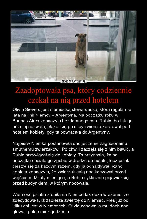Zaadoptowała psa, który codziennie czekał na nią przed hotelem – Olivia Sievers jest niemiecką stewardessą, która regularnie lata na linii Niemcy – Argentyna. Na początku roku w Buenos Aires zobaczyła bezdomnego psa. Rubio, bo tak go później nazwała, błąkał się po ulicy i wiernie koczował pod hotelem kobiety, gdy ta powracała do Argentyny.Najpierw Niemka postanowiła dać jedzenie zagubionemu i smutnemu zwierzakowi. Po chwili zaczęła się z nim bawić, a Rubio przywiązał się do kobiety. Ta przyznała, że na początku chciała go zgubić w drodze do hotelu, lecz psiak cieszył się za każdym razem, gdy ją odnajdywał. Rano kobieta zobaczyła, że zwierzak całą noc koczował przed wejściem. Mijały miesiące, a Rubio cyklicznie pojawiał się przed budynkiem, w którym nocowała. Wierność psiaka zrobiła na Niemce tak duże wrażenie, że zdecydowała, iż zabierze zwierzę do Niemiec. Pies już od kilku dni jest w Niemczech. Olivia zapewniła mu dach nad głową i pełne miski jedzenia