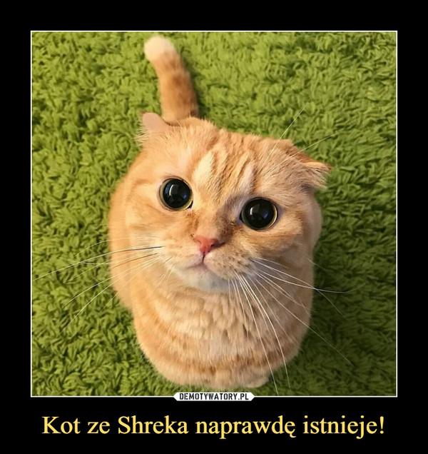 Kot ze Shreka naprawdę istnieje! –