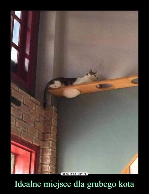 Idealne miejsce dla grubego kota