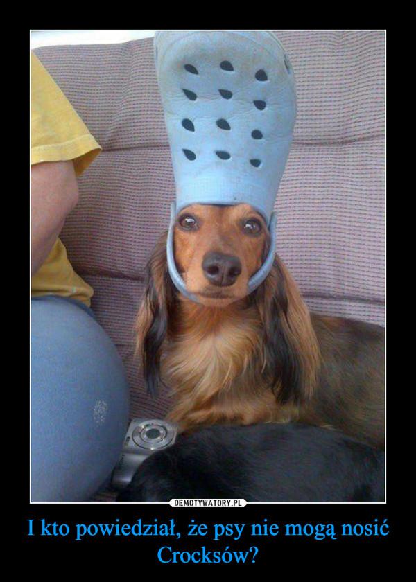 I kto powiedział, że psy nie mogą nosić Crocksów? –