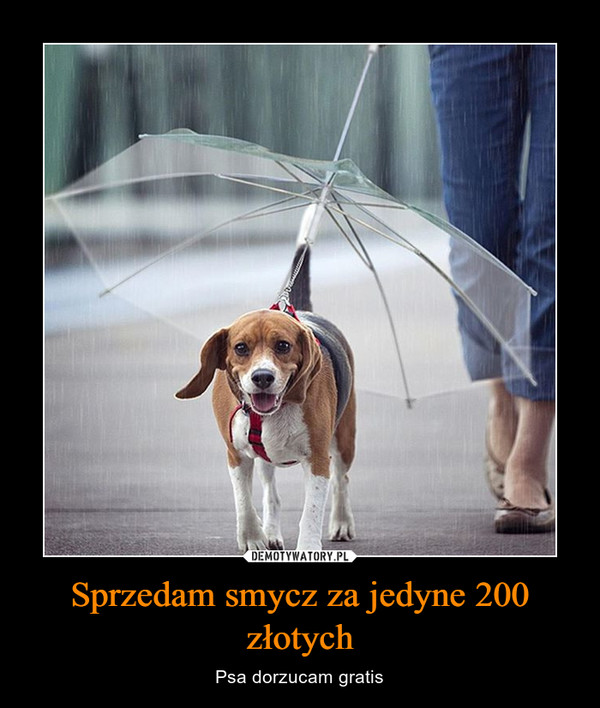 Sprzedam smycz za jedyne 200 złotych – Psa dorzucam gratis