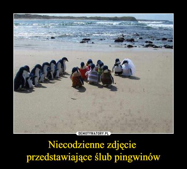 Niecodzienne zdjęcie przedstawiające ślub pingwinów –