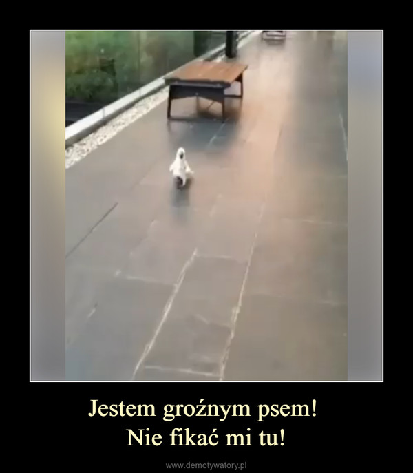 Jestem groźnym psem! Nie fikać mi tu! –