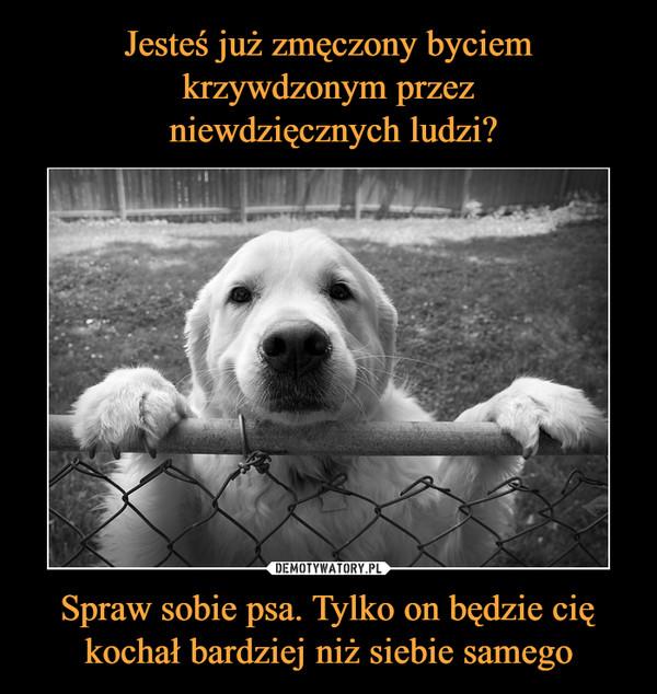 Spraw sobie psa. Tylko on będzie cię kochał bardziej niż siebie samego –