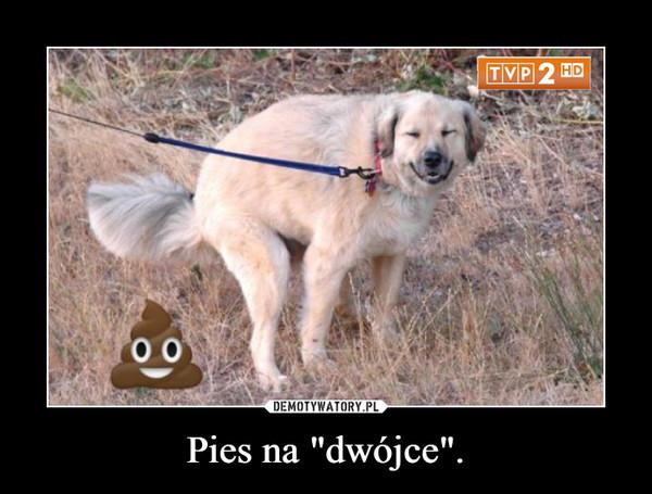 "Pies na ""dwójce"". –"