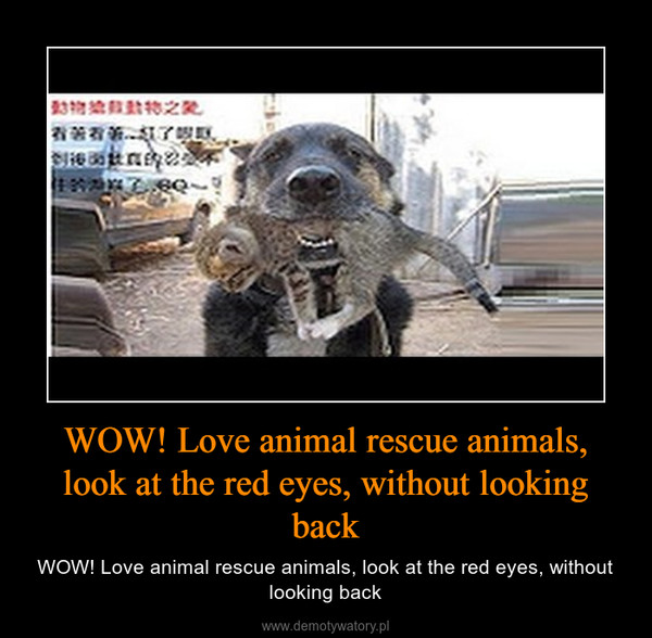 WOW! Love animal rescue animals, look at the red eyes, without looking back – WOW! Love animal rescue animals, look at the red eyes, without looking back