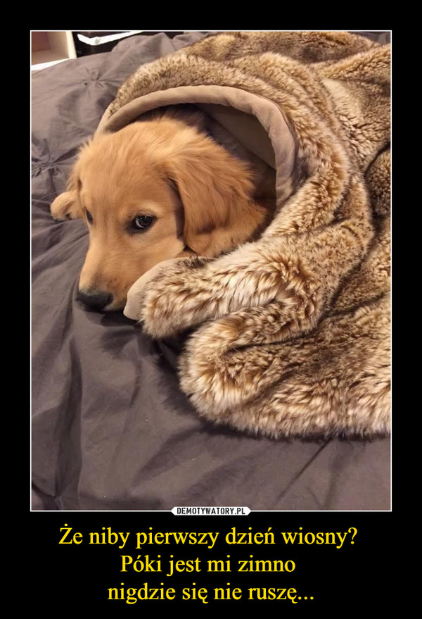 Że niby pierwszy dzień wiosny? Póki jest mi zimno nigdzie się nie ruszę... –