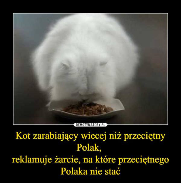 Kot zarabiający wiecej niż przeciętny Polak, reklamuje żarcie, na które przeciętnego Polaka nie stać –