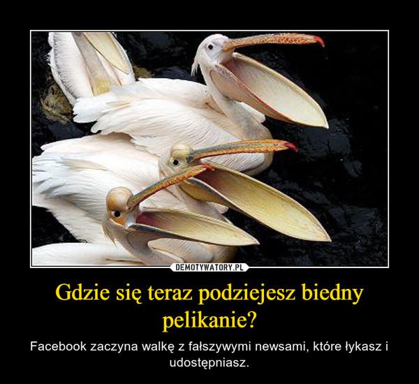 Gdzie się teraz podziejesz biedny pelikanie? – Facebook zaczyna walkę z fałszywymi newsami, które łykasz i udostępniasz.