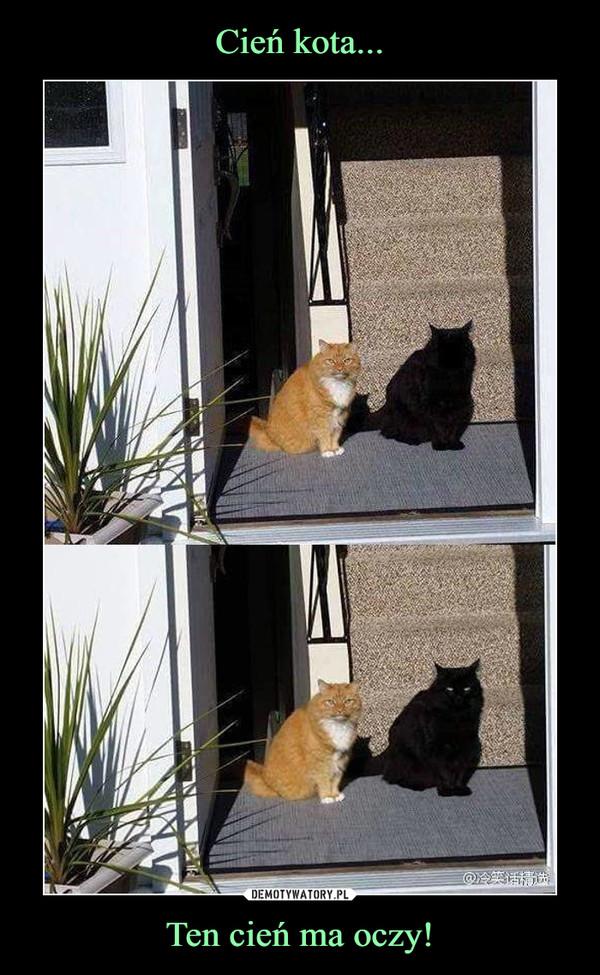 Ten cień ma oczy! –