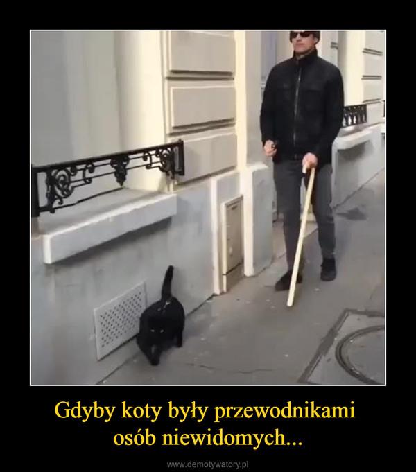 Gdyby koty były przewodnikami osób niewidomych... –