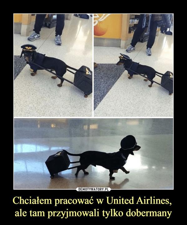 Chciałem pracować w United Airlines, ale tam przyjmowali tylko dobermany –