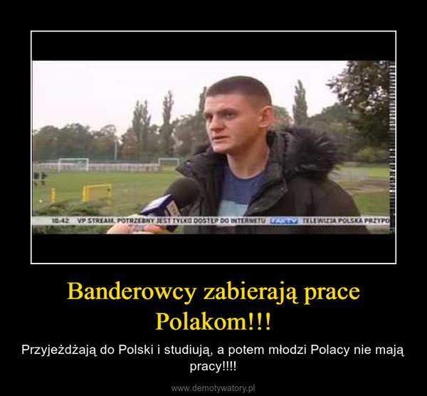 Banderowcy zabierają prace Polakom!!! – Przyjeżdżają do Polski i studiują, a potem młodzi Polacy nie mają pracy!!!!