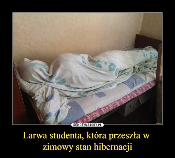 Larwa studenta, która przeszła w zimowy stan hibernacji –