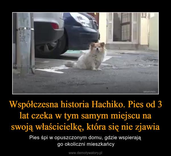 Współczesna historia Hachiko. Pies od 3 lat czeka w tym samym miejscu na swoją właścicielkę, która się nie zjawia – Pies śpi w opuszczonym domu, gdzie wspierają go okoliczni mieszkańcy
