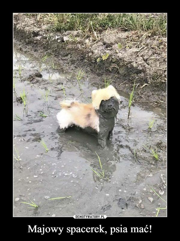Majowy spacerek, psia mać! –