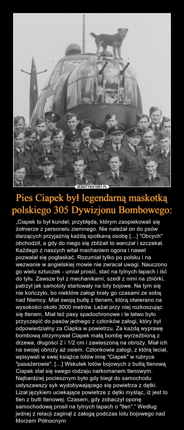 """Pies Ciapek był legendarną maskotką polskiego 305 Dywizjonu Bombowego: – """"Ciapek to był kundel, przybłęda, którym zaopiekowali się żołnierze z personelu ziemnego. Nie należał on do psów darzących przyjaźnią każdą spotkaną osobę […] """"Obcych"""" obchodził, a gdy do niego się zbliżali to warczał i szczekał. Każdego z naszych witał machaniem ogona i nawet pozwalał się pogłaskać. Rozumiał tylko po polsku i na wezwanie w angielskiej mowie nie zwracał uwagi. Nauczono go wielu sztuczek - umiał prosić, stać na tylnych łapach i iść do tyłu. Zawsze był z mechanikami, szedł z nimi na zbiórki, patrzył jak samoloty startowały na loty bojowe. Na tym się nie kończyło, bo niektóre załogi brały go czasami ze sobą nad Niemcy. Miał swoją butlę z tlenem, którą otwierano na wysokości około 3000 metrów. Leżał przy niej rozkoszując się tlenem. Miał też pasy spadochronowe i te łatwo było przyczepić do pasów jednego z członków załogi, który był odpowiedzialny za Ciapka w powietrzu. Za każdą wyprawę bombową otrzymywał Ciapek małą bombę wyrzeźbioną z drzewa, długości 2 i 1/2 cm i zawieszoną na obroży. Miał ich na swojej obroży aż osiem. Członkowie załogi, z którą leciał, wpisywali w swej książce lotów imię """"Ciapek"""" w rubryce """"pasażerowie"""". […] Wskutek lotów bojowych z butlą tlenową Ciapek stał się swego rodzaju narkomanem tlenowym. Najbardziej pociesznym było gdy biegł do samochodu usłyszawszy syk wydobywającego się powietrza z dętki. Lizał językiem uciekające powietrze z dętki myśląc, iż jest to tlen z butli tlenowej. Czasem, gdy zobaczył oponę samochodową prosił na tylnych łapach o """"tlen""""."""" Według jednej z relacji zaginął z załogą podczas lotu bojowego nad Morzem Północnym"""
