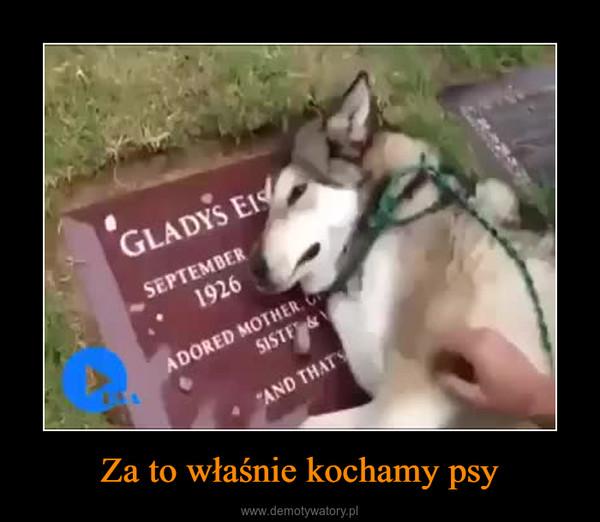 Za to właśnie kochamy psy –