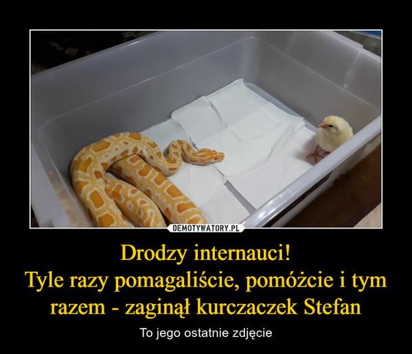 Drodzy internauci!Tyle razy pomagaliście, pomóżcie i tym razem - zaginął kurczaczek Stefan – To jego ostatnie zdjęcie