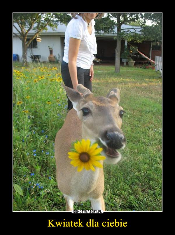 Kwiatek dla ciebie –