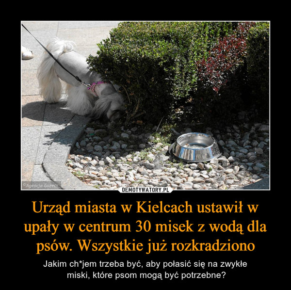 Urząd miasta w Kielcach ustawił w upały w centrum 30 misek z wodą dla psów. Wszystkie już rozkradziono – Jakim ch*jem trzeba być, aby połasić się na zwykłe miski, które psom mogą być potrzebne?