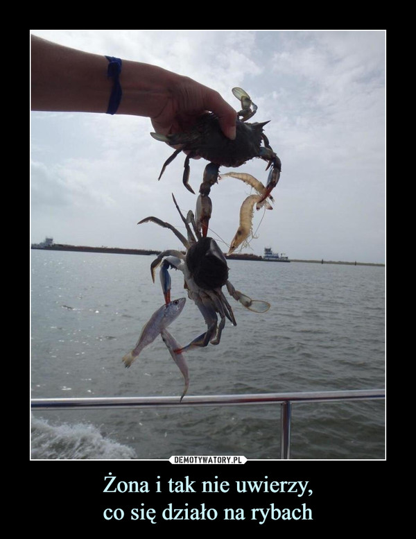 Żona i tak nie uwierzy,co się działo na rybach –