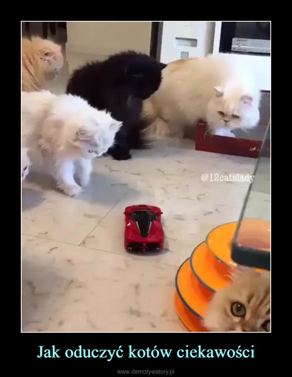 Jak oduczyć kotów ciekawości –