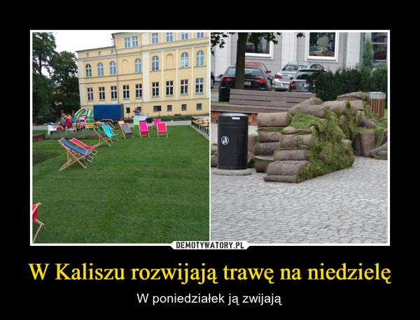 W Kaliszu rozwijają trawę na niedzielę