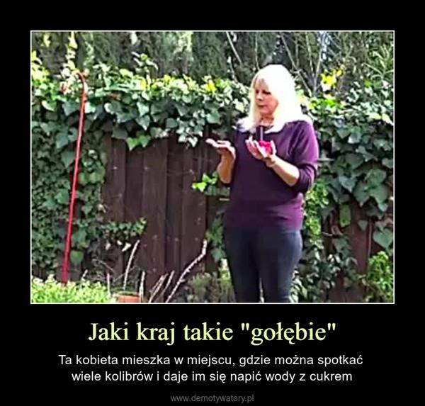 """Jaki kraj takie """"gołębie"""" – Ta kobieta mieszka w miejscu, gdzie można spotkać wiele kolibrów i daje im się napić wody z cukrem"""
