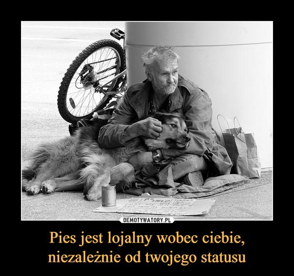Pies jest lojalny wobec ciebie,niezależnie od twojego statusu –
