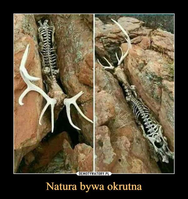 Natura bywa okrutna –