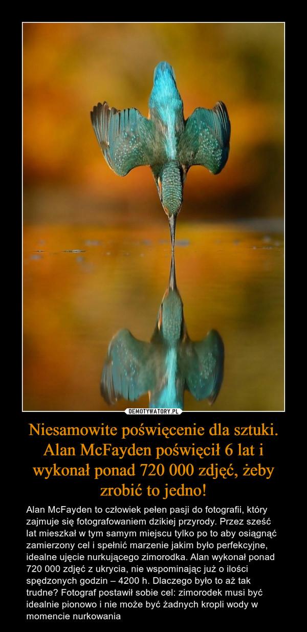 Niesamowite poświęcenie dla sztuki. Alan McFayden poświęcił 6 lat i wykonał ponad 720 000 zdjęć, żeby zrobić to jedno! – Alan McFayden to człowiek pełen pasji do fotografii, który zajmuje się fotografowaniem dzikiej przyrody. Przez sześć lat mieszkał w tym samym miejscu tylko po to aby osiągnąć zamierzony cel i spełnić marzenie jakim było perfekcyjne, idealne ujęcie nurkującego zimorodka. Alan wykonał ponad 720 000 zdjęć z ukrycia, nie wspominając już o ilości spędzonych godzin – 4200 h. Dlaczego było to aż tak trudne? Fotograf postawił sobie cel: zimorodek musi być idealnie pionowo i nie może być żadnych kropli wody w momencie nurkowania