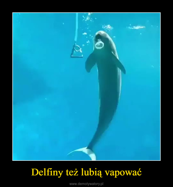 Delfiny też lubią vapować –