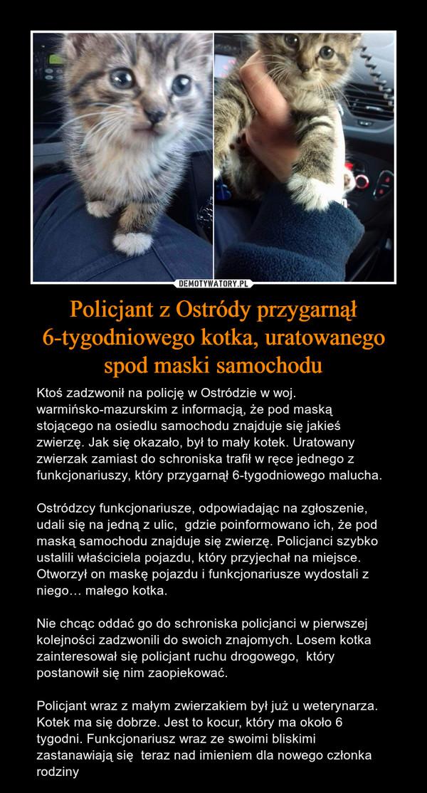 Policjant z Ostródy przygarnął 6-tygodniowego kotka, uratowanego spod maski samochodu – Ktoś zadzwonił na policję w Ostródzie w woj. warmińsko-mazurskim z informacją, że pod maską stojącego na osiedlu samochodu znajduje się jakieś zwierzę. Jak się okazało, był to mały kotek. Uratowany zwierzak zamiast do schroniska trafił w ręce jednego z funkcjonariuszy, który przygarnął 6-tygodniowego malucha.Ostródzcy funkcjonariusze, odpowiadając na zgłoszenie, udali się na jedną z ulic,  gdzie poinformowano ich, że pod maską samochodu znajduje się zwierzę. Policjanci szybko ustalili właściciela pojazdu, który przyjechał na miejsce. Otworzył on maskę pojazdu i funkcjonariusze wydostali z niego… małego kotka.Nie chcąc oddać go do schroniska policjanci w pierwszej kolejności zadzwonili do swoich znajomych. Losem kotka zainteresował się policjant ruchu drogowego,  który postanowił się nim zaopiekować.Policjant wraz z małym zwierzakiem był już u weterynarza. Kotek ma się dobrze. Jest to kocur, który ma około 6 tygodni. Funkcjonariusz wraz ze swoimi bliskimi zastanawiają się  teraz nad imieniem dla nowego członka rodziny
