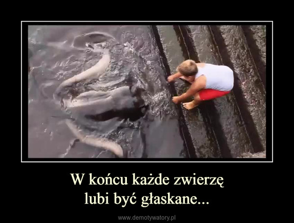 W końcu każde zwierzęlubi być głaskane... –