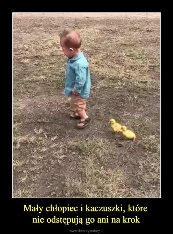 Mały chłopiec i kaczuszki, które nie odstępują go ani na krok –