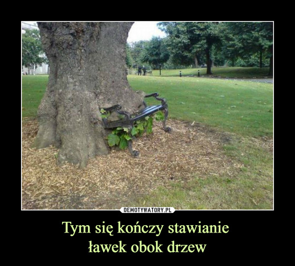 Tym się kończy stawianie ławek obok drzew –