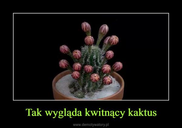 Tak wygląda kwitnący kaktus –