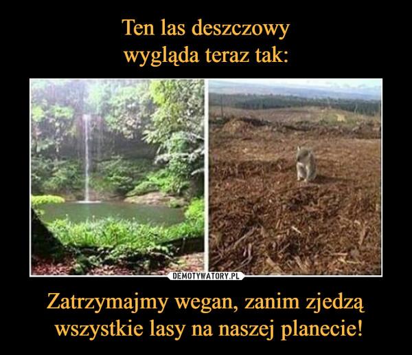 Zatrzymajmy wegan, zanim zjedzą wszystkie lasy na naszej planecie! –