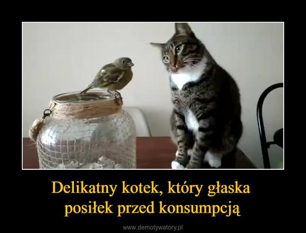 Delikatny kotek, który głaska posiłek przed konsumpcją –