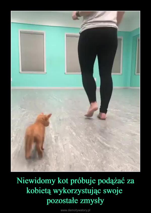 Niewidomy kot próbuje podążać za kobietą wykorzystując swoje pozostałe zmysły –