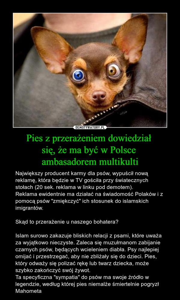"""Pies z przerażeniem dowiedział się, że ma być w Polsce ambasadorem multikulti – Największy producent karmy dla psów, wypuścił nową reklamę, która będzie w TV gościła przy światecznych stołach (20 sek. reklama w linku pod demotem).Reklama ewidentnie ma działać na świadomość Polaków i z pomocą psów """"zmiękczyć"""" ich stosunek do islamskich imigrantów.Skąd to przerażenie u naszego bohatera?Islam surowo zakazuje bliskich relacji z psami, które uważa za wyjątkowo nieczyste. Zaleca się muzułmanom zabijanie czarnych psów, będących wcieleniem diabła. Psy najlepiej omijać i przestrzegać, aby nie zbliżały się do dzieci. Pies, który odważy się polizać rękę lub twarz dziecka, może szybko zakończyć swój żywot. Ta specyficzna """"sympatia"""" do psów ma swoje źródło w legendzie, według której pies niemalże śmiertelnie pogryzł Mahometa"""