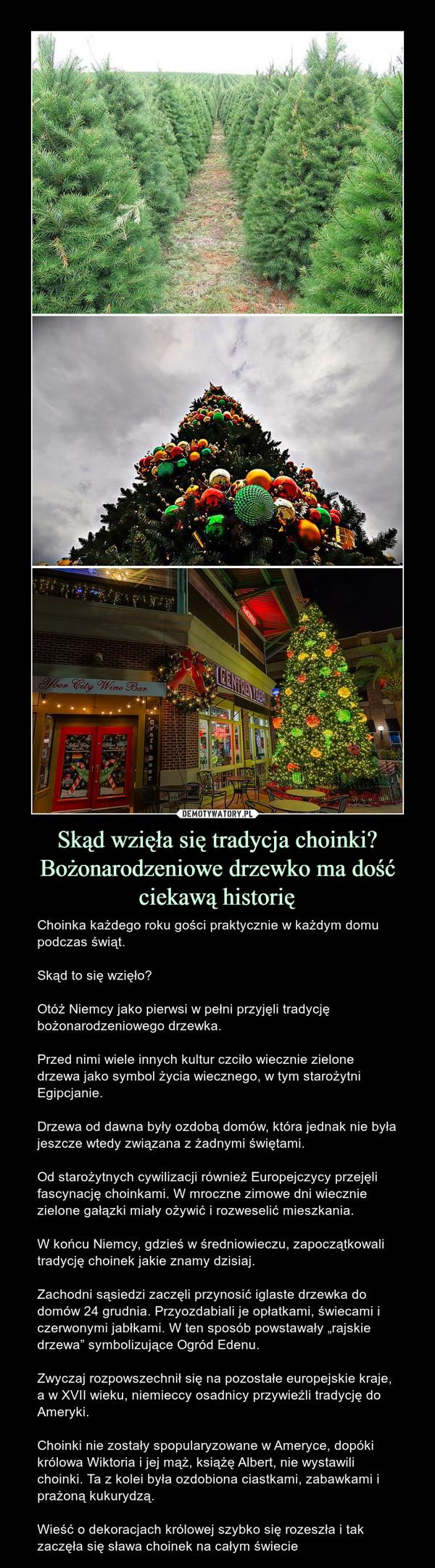 """Skąd wzięła się tradycja choinki? Bożonarodzeniowe drzewko ma dość ciekawą historię – Choinka każdego roku gości praktycznie w każdym domu podczas świąt. Skąd to się wzięło?Otóż Niemcy jako pierwsi w pełni przyjęli tradycję bożonarodzeniowego drzewka.Przed nimi wiele innych kultur czciło wiecznie zielone drzewa jako symbol życia wiecznego, w tym starożytni Egipcjanie.Drzewa od dawna były ozdobą domów, która jednak nie była jeszcze wtedy związana z żadnymi świętami.Od starożytnych cywilizacji również Europejczycy przejęli fascynację choinkami. W mroczne zimowe dni wiecznie zielone gałązki miały ożywić i rozweselić mieszkania.W końcu Niemcy, gdzieś w średniowieczu, zapoczątkowali tradycję choinek jakie znamy dzisiaj.Zachodni sąsiedzi zaczęli przynosić iglaste drzewka do domów 24 grudnia. Przyozdabiali je opłatkami, świecami i czerwonymi jabłkami. W ten sposób powstawały """"rajskie drzewa"""" symbolizujące Ogród Edenu.Zwyczaj rozpowszechnił się na pozostałe europejskie kraje, a w XVII wieku, niemieccy osadnicy przywieźli tradycję do Ameryki.Choinki nie zostały spopularyzowane w Ameryce, dopóki królowa Wiktoria i jej mąż, książę Albert, nie wystawili choinki. Ta z kolei była ozdobiona ciastkami, zabawkami i prażoną kukurydzą.Wieść o dekoracjach królowej szybko się rozeszła i tak zaczęła się sława choinek na całym świecie"""