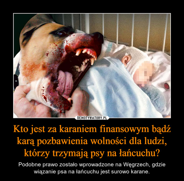 Kto jest za karaniem finansowym bądź karą pozbawienia wolności dla ludzi, którzy trzymają psy na łańcuchu? – Podobne prawo zostało wprowadzone na Węgrzech, gdzie wiązanie psa na łańcuchu jest surowo karane.